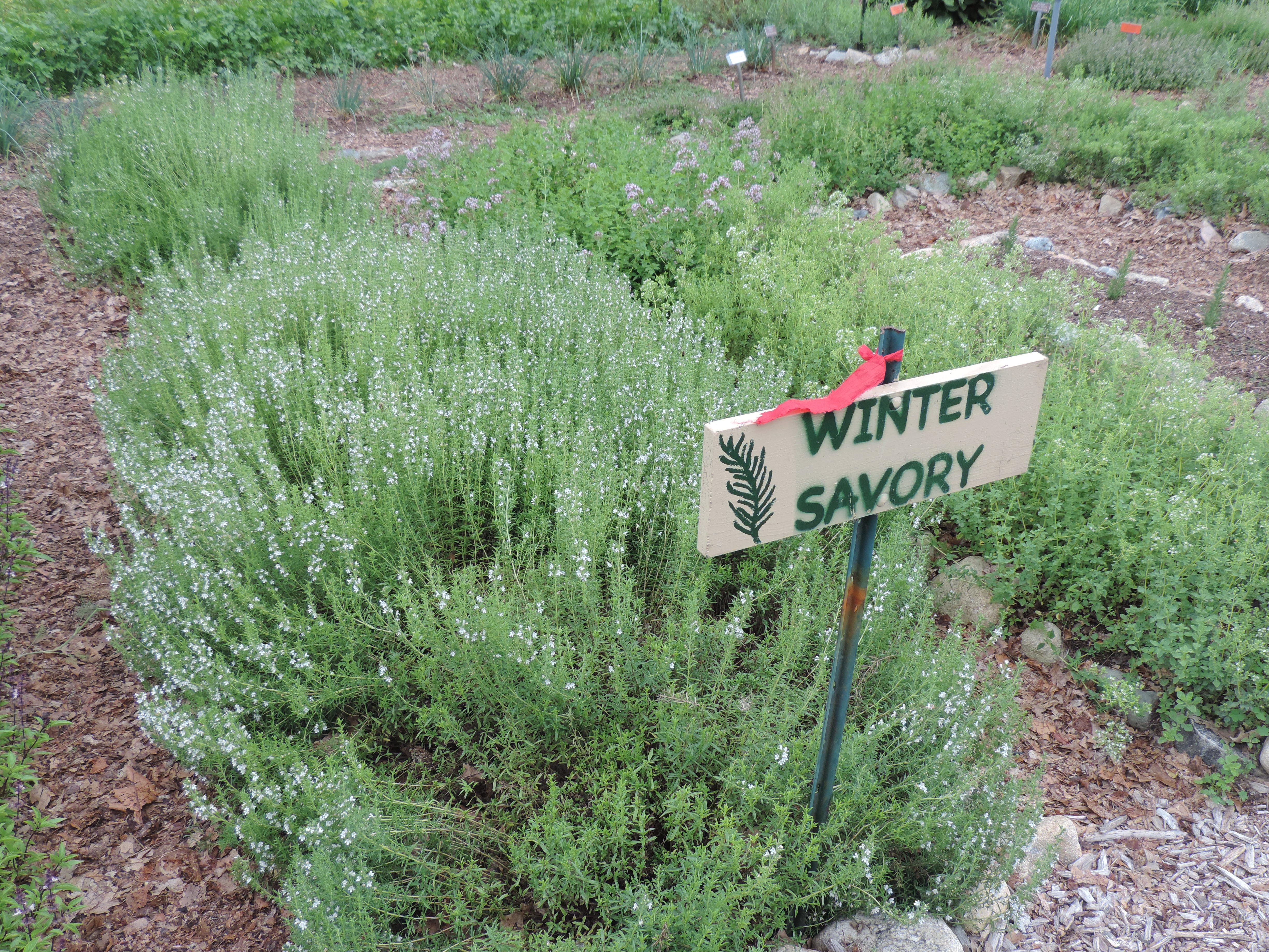 Harvesting Herbs? Look for the Red Ties