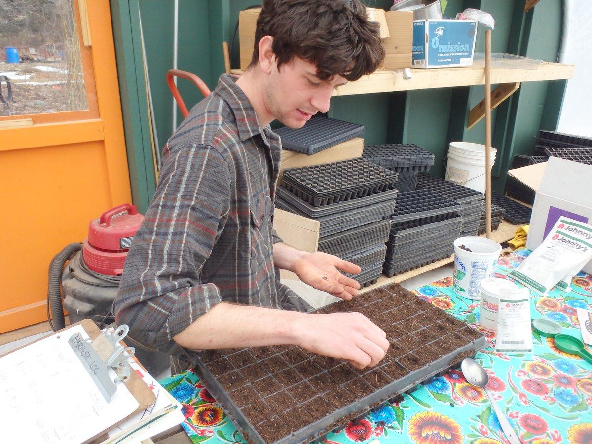 Kenneth seeding cabbage