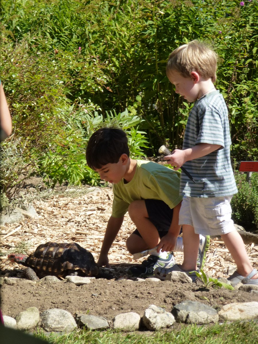 The only thing more popular than the bunnies, Lisa Shaftel's tortoises