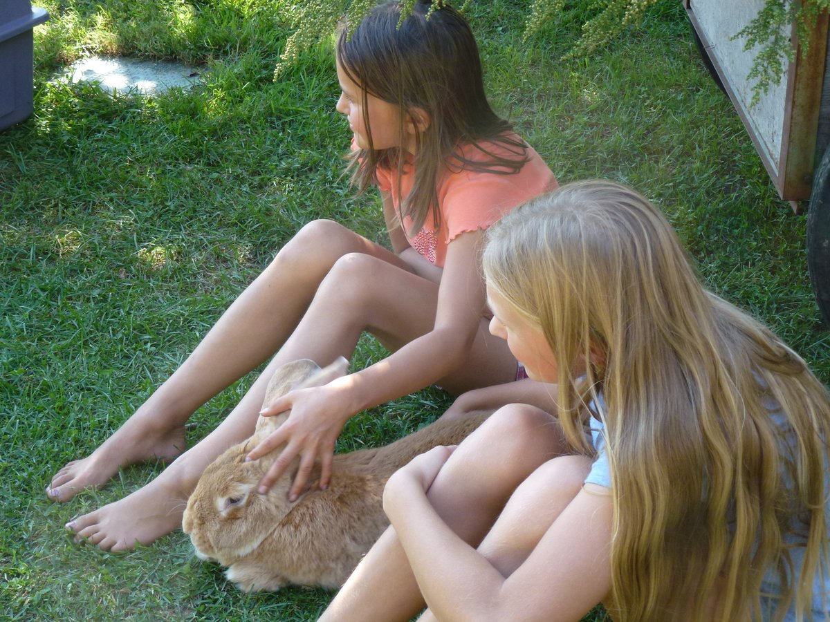 Fall festival-Louise Bendel's bunny is a big hit
