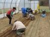April: Planting Alliums