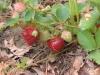 June: Beautiful (and Sweet) Strawberries!