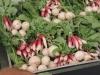 June: The Freshest Radishes