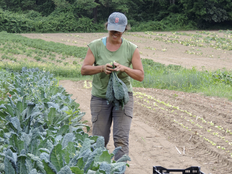 Mel harvests kale