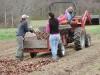 Mulching the peas