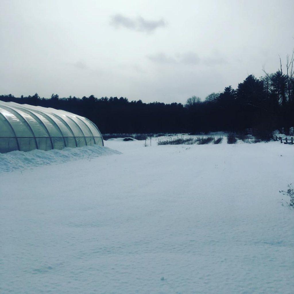 2019 Winter Share
