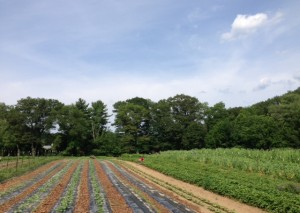 Farm Vista, by Lyn Crevier.