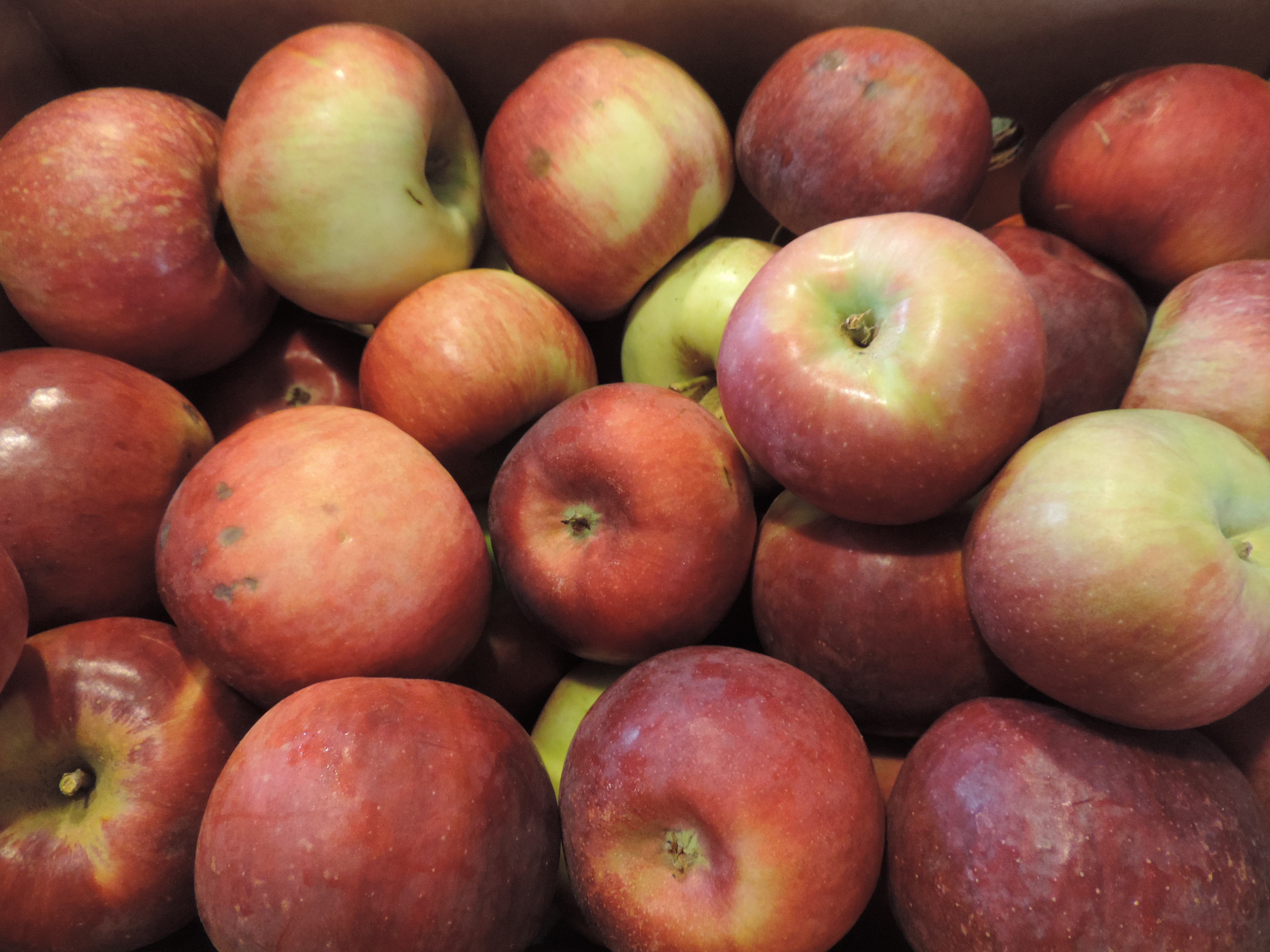 Fall Fruit Share Begins in September