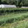 Stearns Farm Still Needs Help to Cover Drought-Related Expenses
