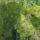 Herb Notes: Rosemary, Lemon Verbena and Coridander Seed