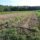 Help Stearns Farm Cover Drought-Related Expenses