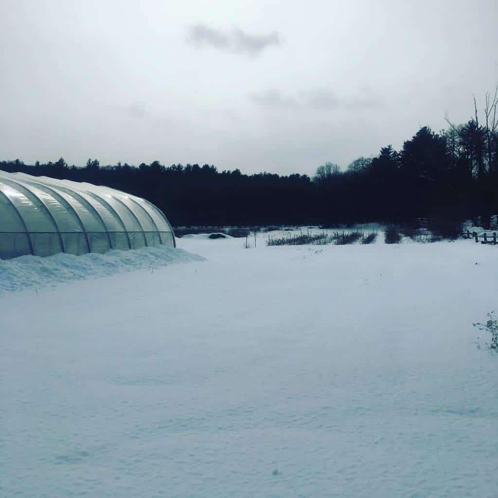 Sleepy Stearns Farm in February