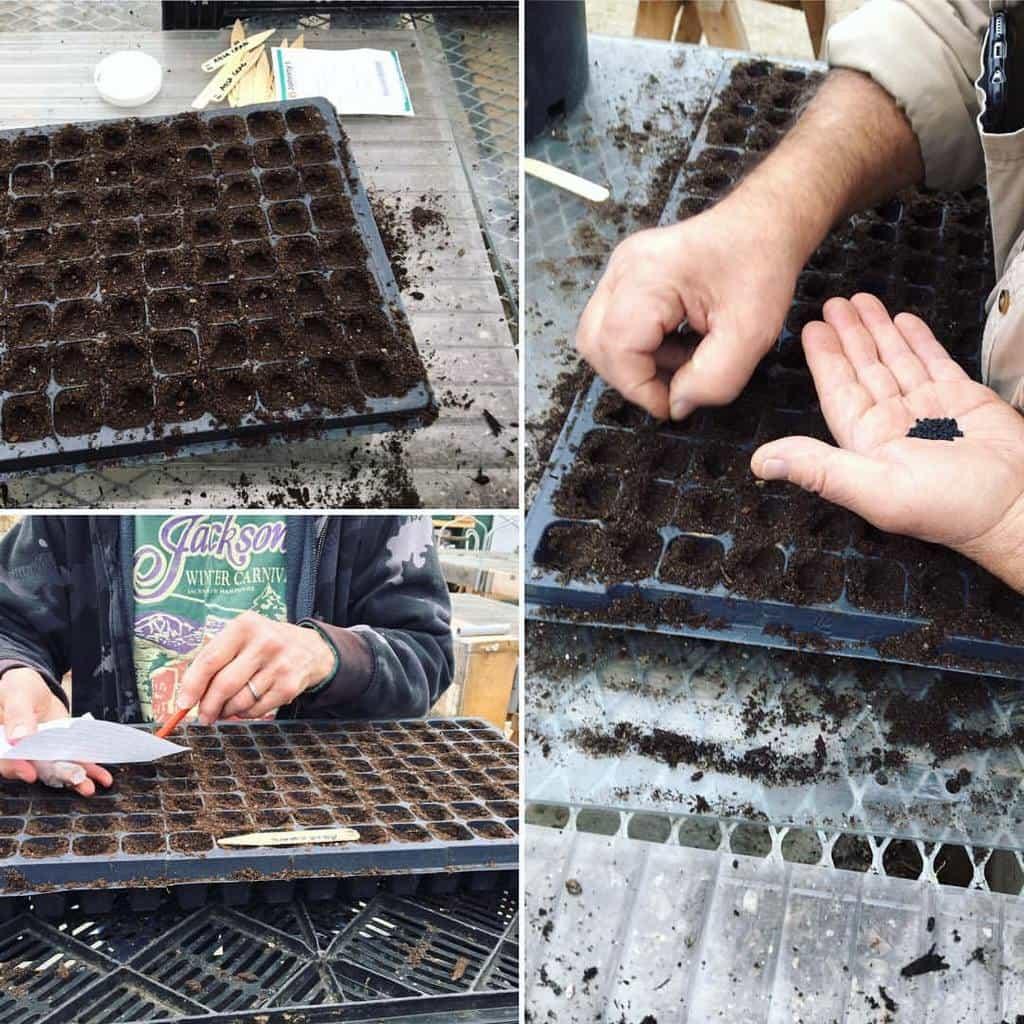 Sal and Frann help with seeding
