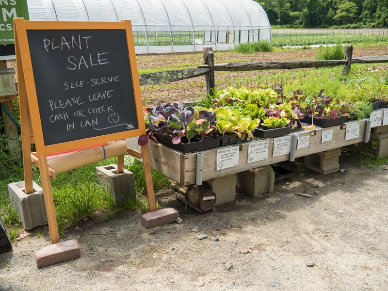 Lots of Plants for Sale