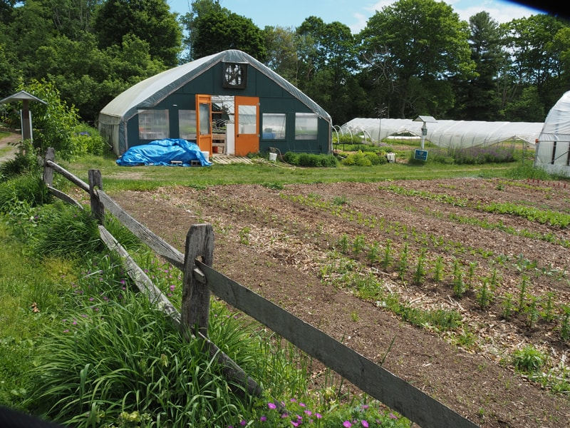 The Greenhouse and the Flower Garden
