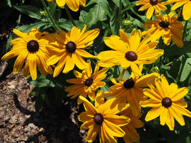Learn Cut Flower Basics on Aug. 19