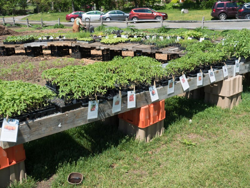 Pick from Dozens of Plants at Our Seedling Sale