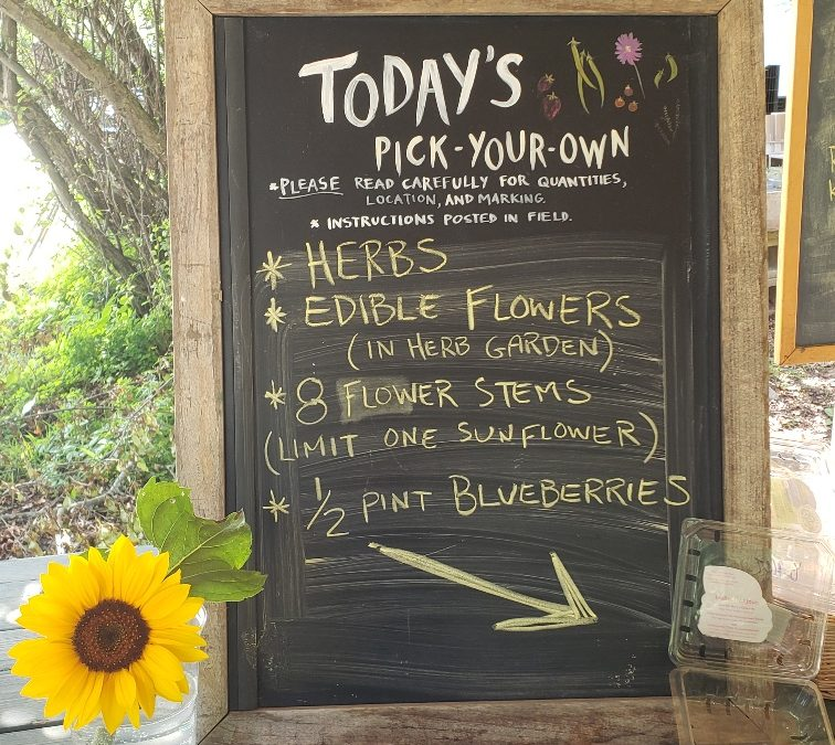 PYO Crops for Summer and Back-to-School CSA Sharers
