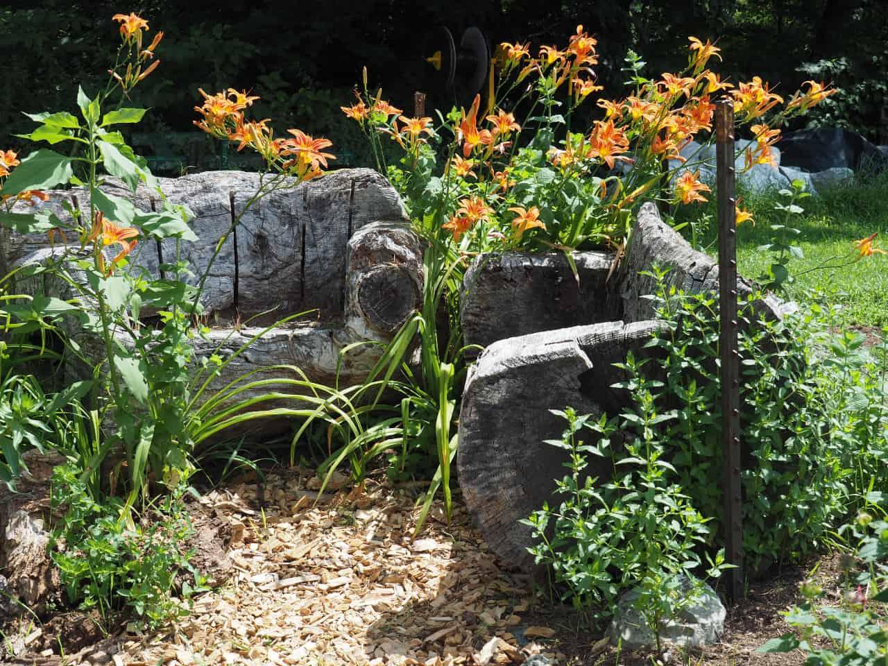 In the Corner of the Tea Herb Garden