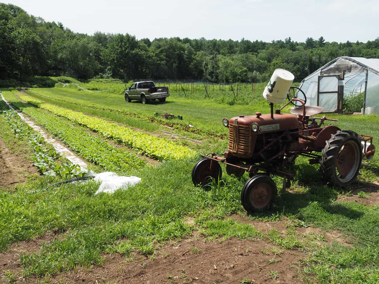 Lettuce Bed, Truck and Tractor