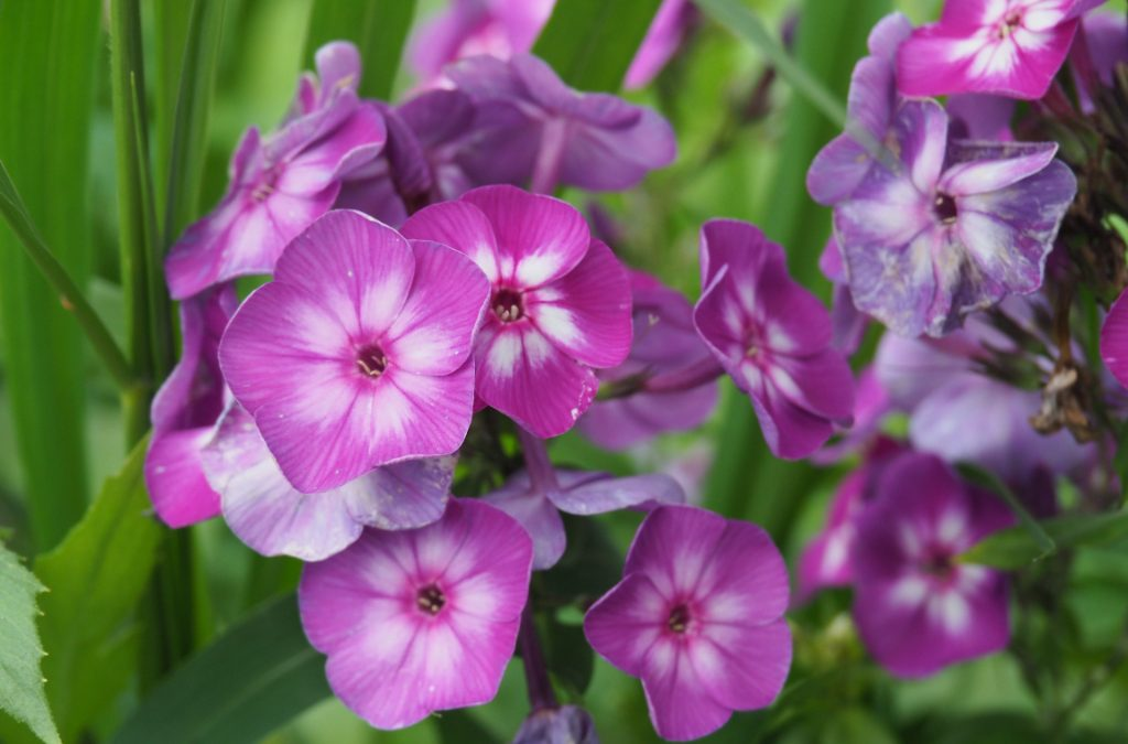 Back-to-School and PYO Flower & Herb Shares Still Available