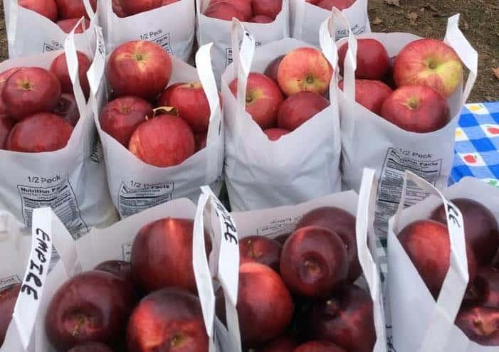 Fruit Share Pickups Start This Week
