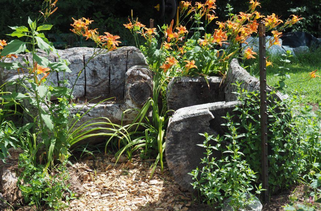 Spotlight on Penelope's Garden