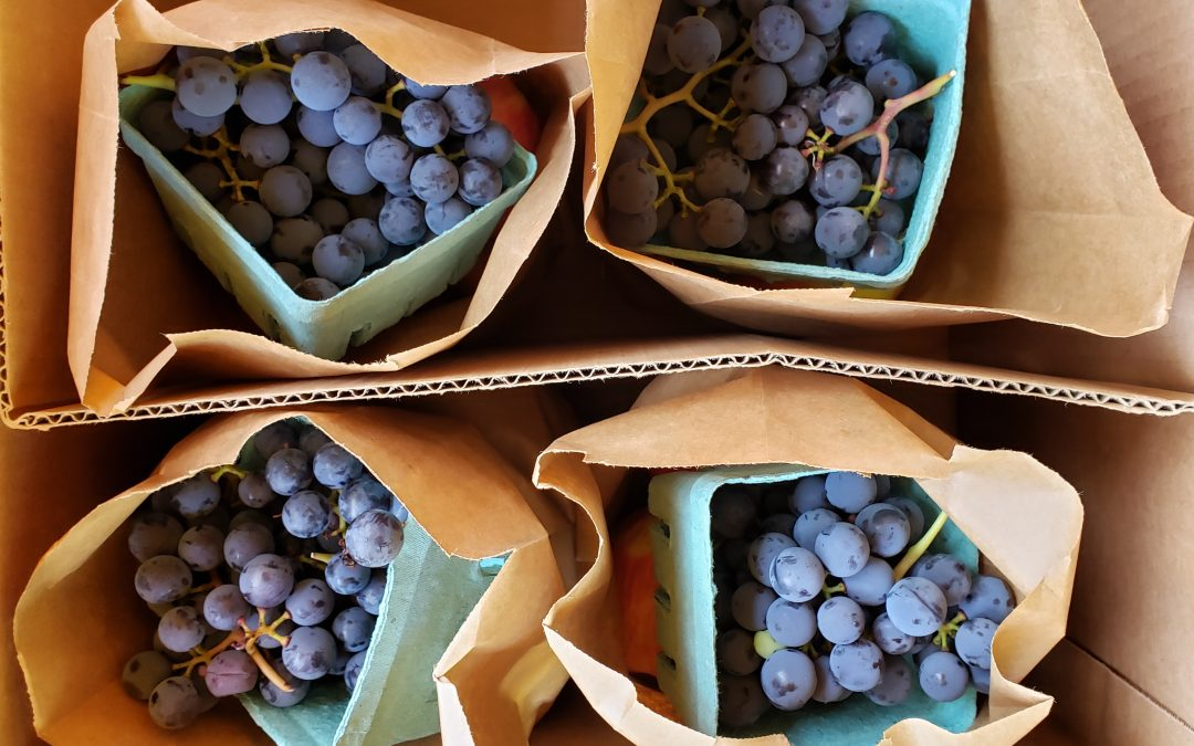 Last Chance to Buy a Fall Fruit Share