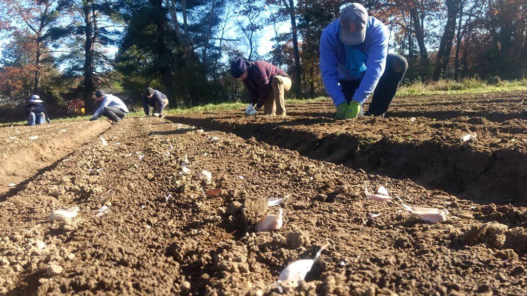 Garlic Planting 10/24