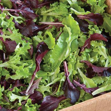 Cutting Lettuce Mix