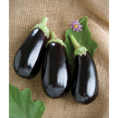 Eggplant: Nadia