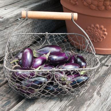 Eggplant: Patio Baby