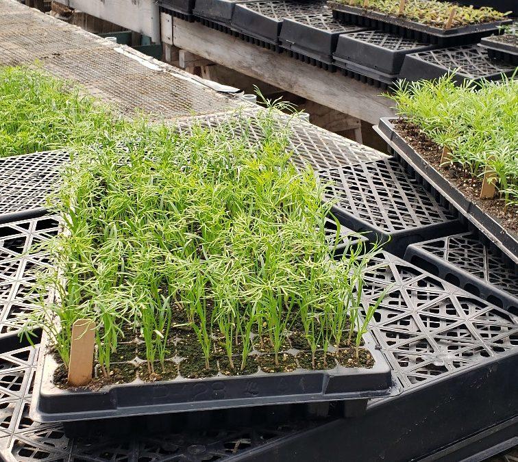 Seedling Sale Online Store Now Open