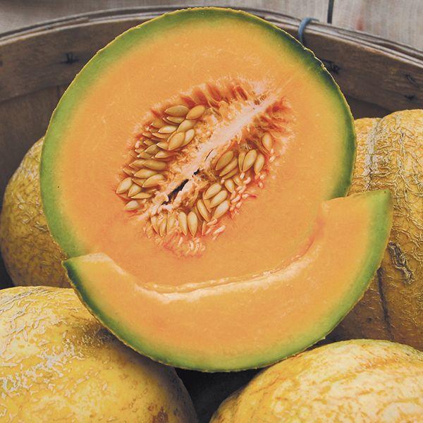 Cantaloupe: PMR Delicious