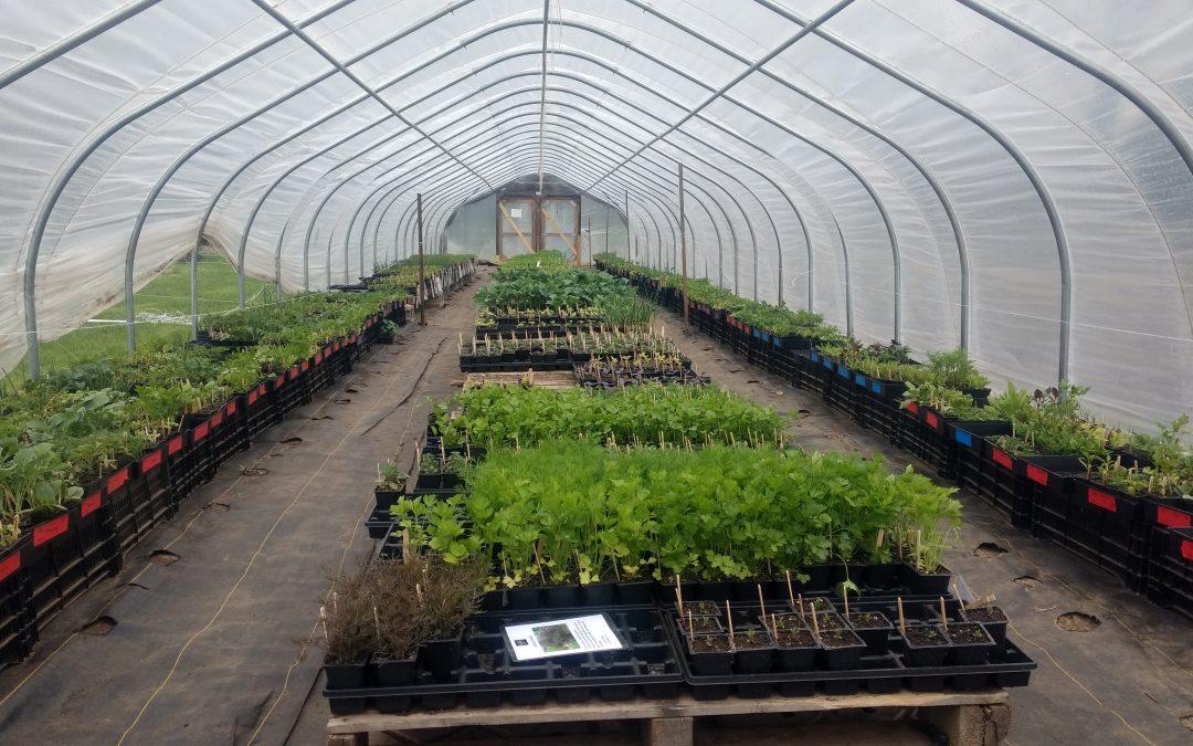Volunteers Needed For Our Seedling Sale