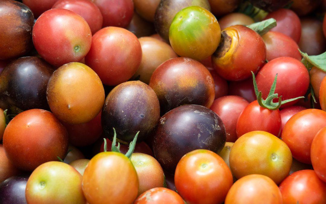 2020 Tomato Guide