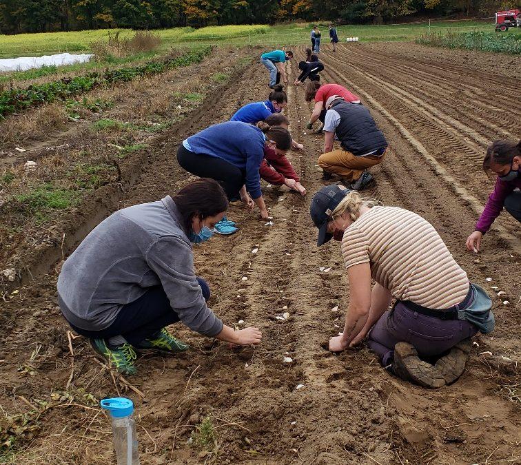 Work Hours Deadline & Garlic Planting