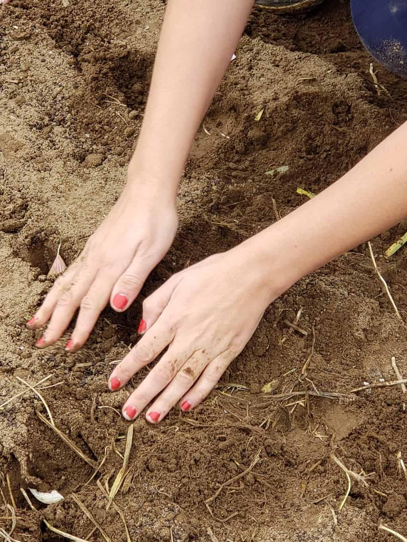 Hands Covering Garlic