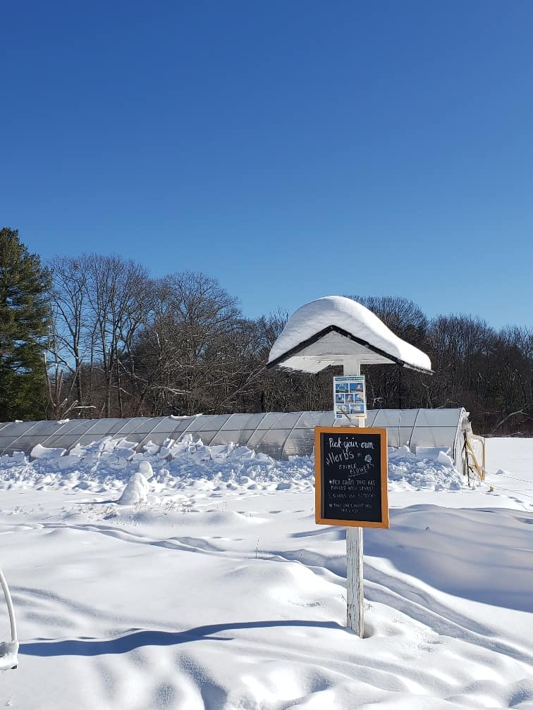 Snowy Herb Garden
