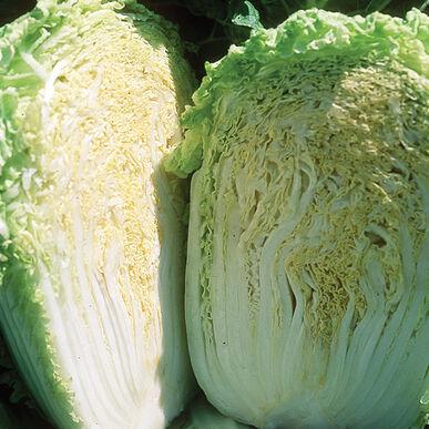 Cabbage: Minuet