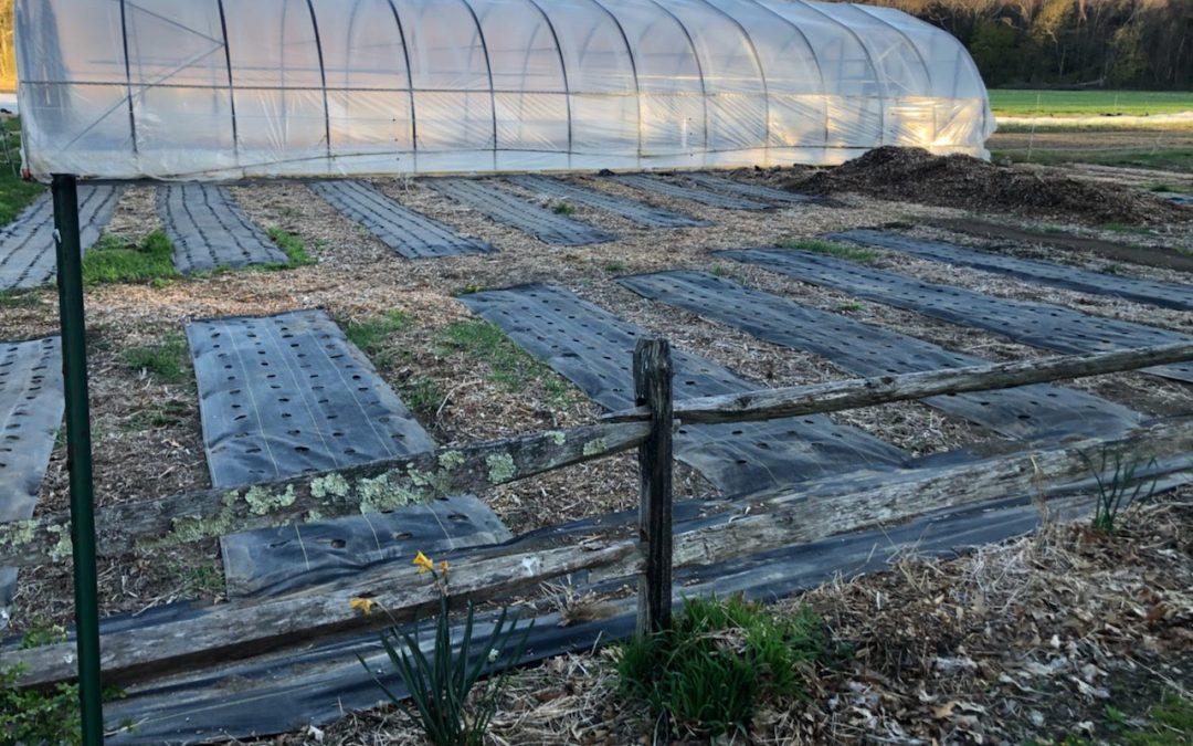 Improvements to the PYO Flower Garden