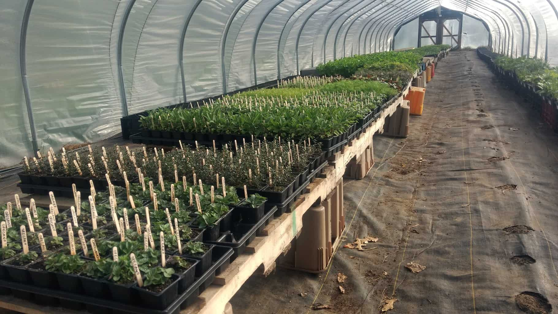 Seedlings Ready for the Sale