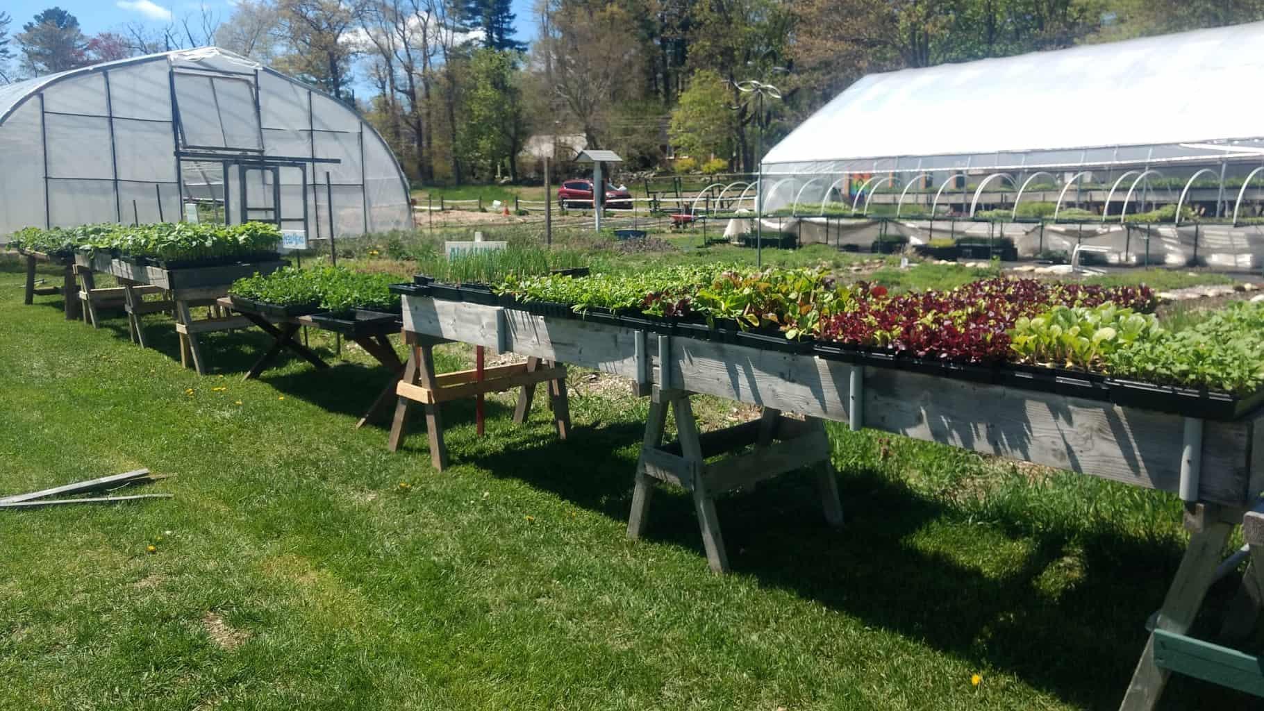 Seedling Sale Trays Outside