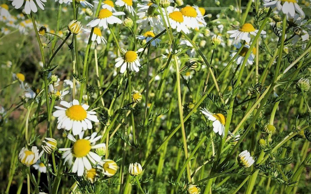 What's Growing in Penelope's Garden