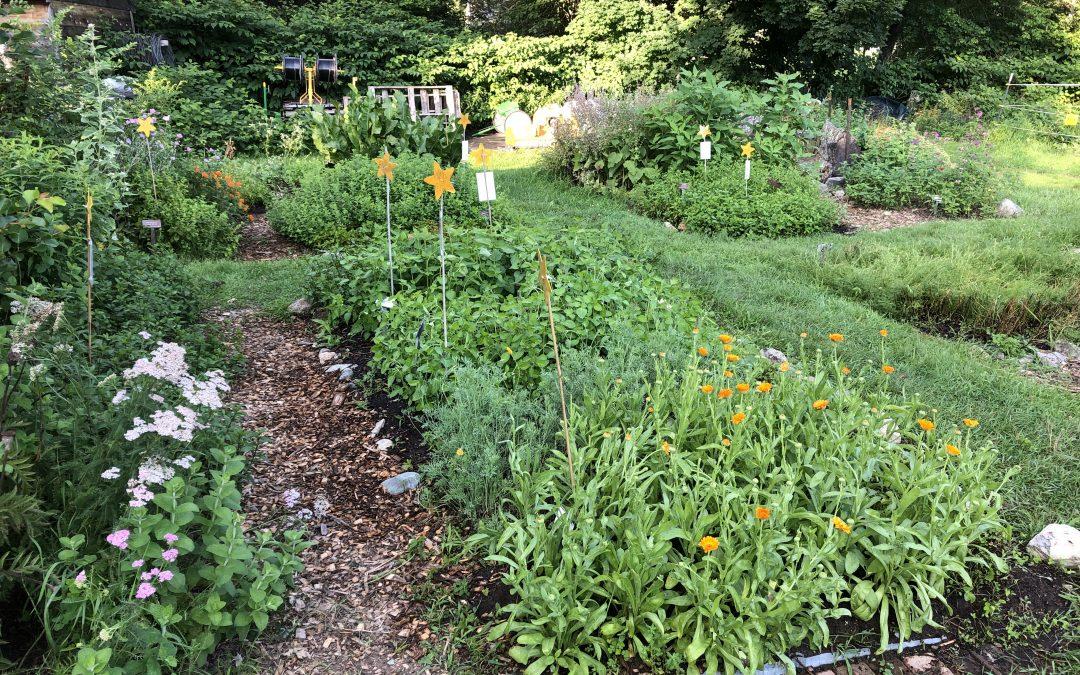 Ready to Pick in Penelope's Garden