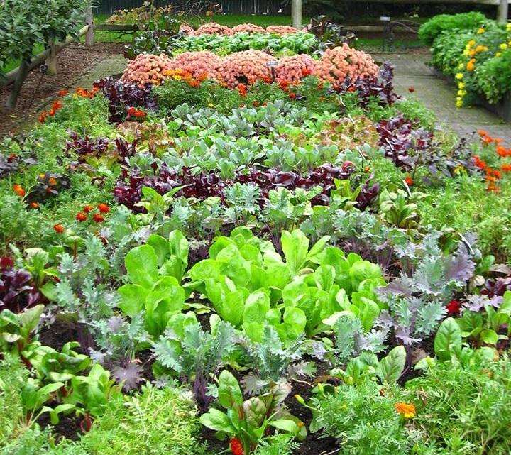 Transition Framingham Hosts Gardening Event