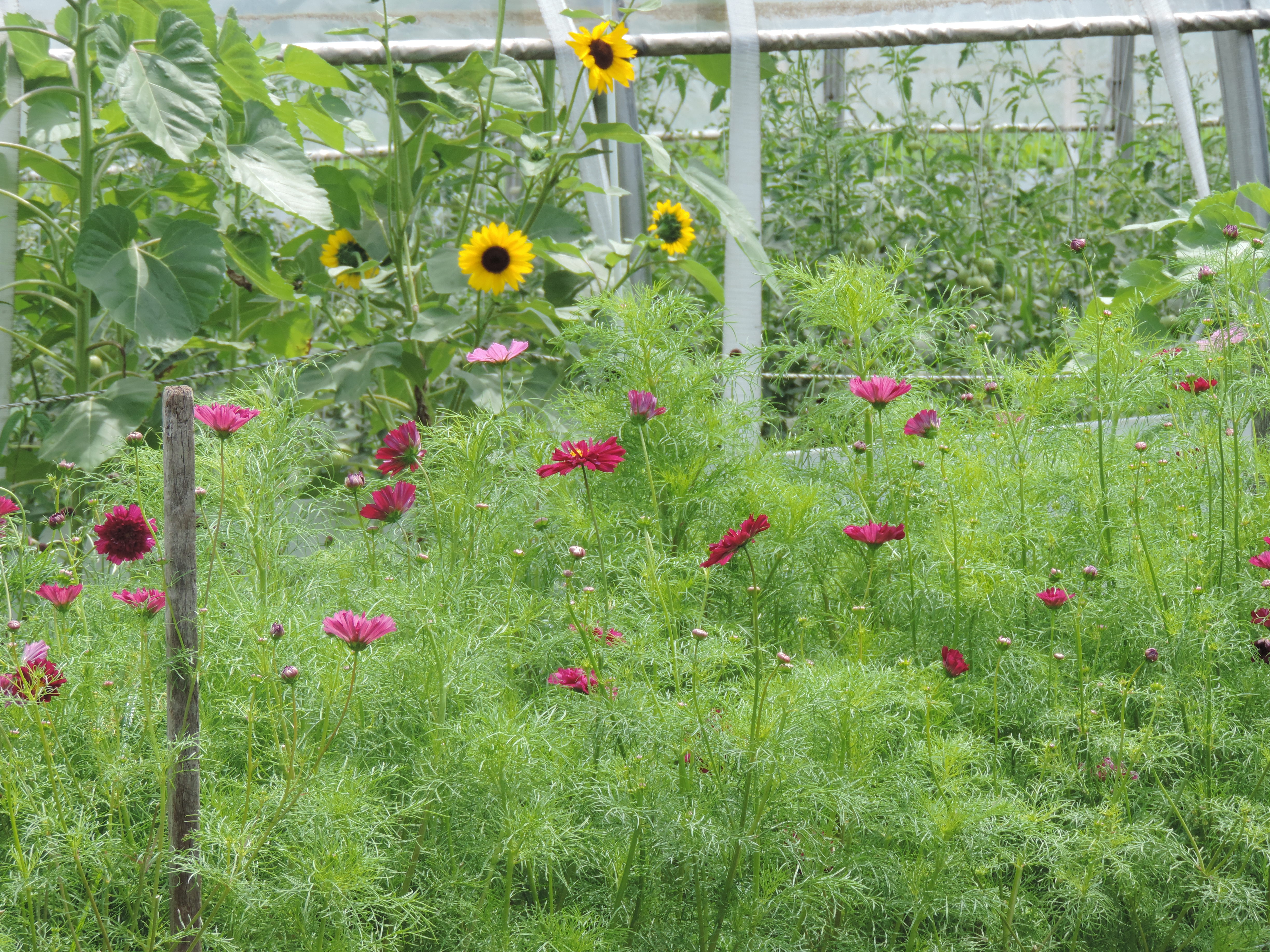 Learn About Sustainable Gardening on Aug. 20